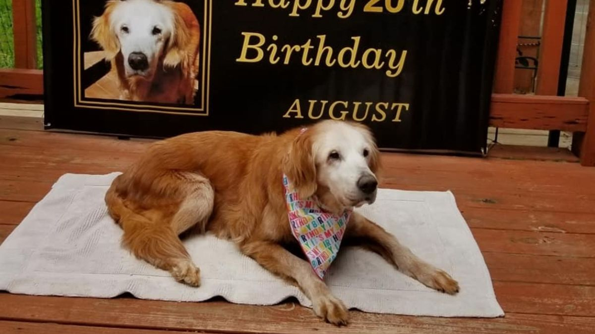In a blog post about August on the GoldHeart Golden Retrievers Rescue website, it's revealed...
