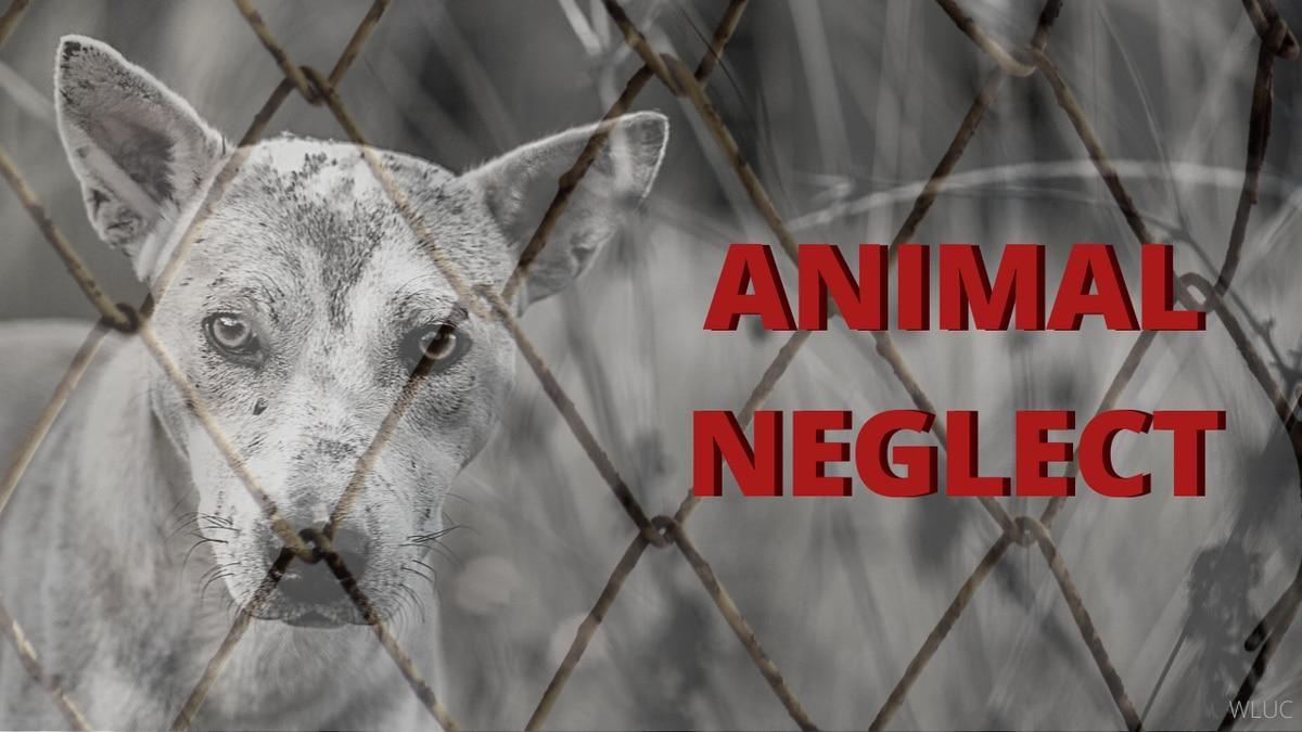 Animal Neglect Graphic